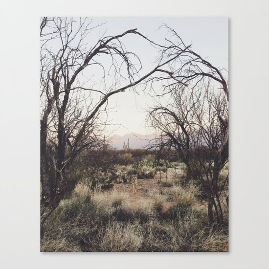 Coyote Canopy Canvas Print