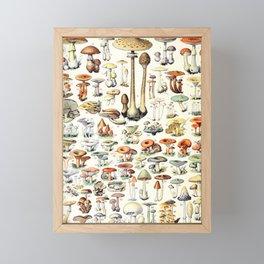 Adolphe Millot - Champignons B - French vintage poster Framed Mini Art Print