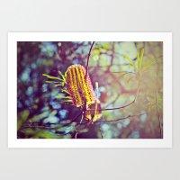 Sunny Bottlebrush Art Print