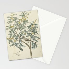 Robert Jacob Gordon - Acacia karroo Hayne or Vachellia karroo - 1777-1786 Stationery Cards
