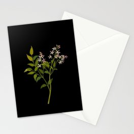 Melia Azedarach Mary Delany Delicate Paper Flower Collage Black Background Floral Botanical Stationery Cards