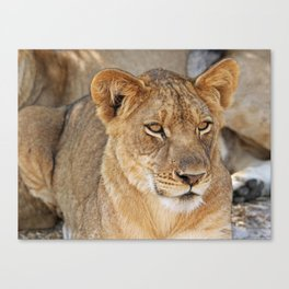 The Young One - Africa wildlife Canvas Print