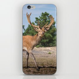 Nature Conservancy II iPhone Skin