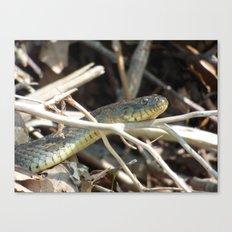 water snake III Canvas Print
