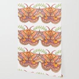 Hawk Moth Wallpaper
