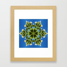 Hydrangea kaleidoscope - white flowers, green leaves, blue sky 161134 k6 Framed Art Print