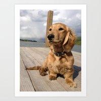 Dock dog Art Print