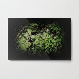 Bukit Timah Nature Reserve Series 2 - 143 Metal Print