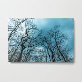 Cloudy sky, naked trees Metal Print