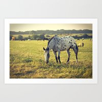 Spotted horse Art Print
