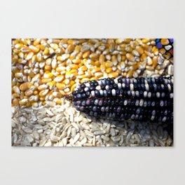 White, yellow and blue corn Canvas Print