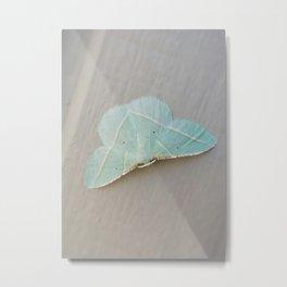 Pale Green Moth Metal Print