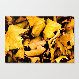 """Scattered Leaves""  Canvas Print"