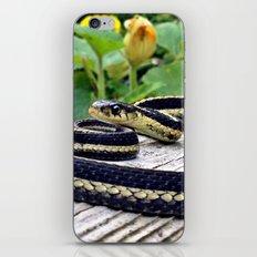 Garter Snake, High Park Gardens iPhone & iPod Skin