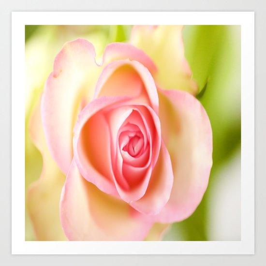 Lovely delicate pink rose Art Print