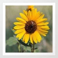 Beautiful Bee on a Sunflower Art Print