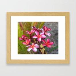 Hawaiian Pink Plumera Framed Art Print