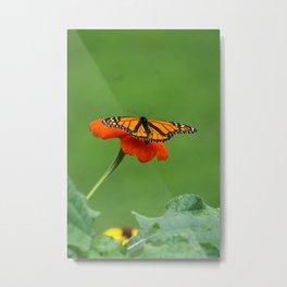 Butterfly on Orange Color Flower Metal Print