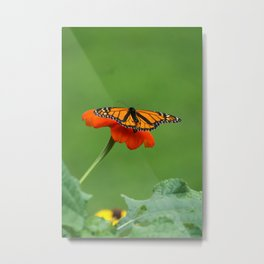Butterfly on Orange Color Flower Metal Print