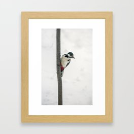 Knock, knock. Who's There? Woodpecker! Framed Art Print