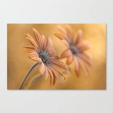 Daisy double Canvas Print