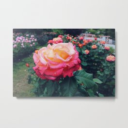 You Are My Rose Metal Print
