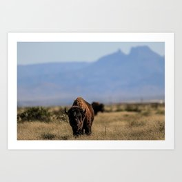 Bufalo, Bisonte, landscape Art Print