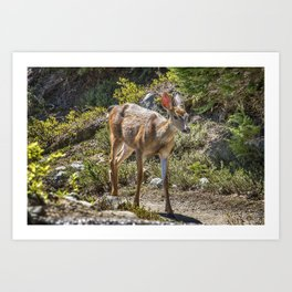 Crossing Paths with a Black-Tailed Deer Art Print