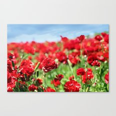 Scarlet Field Canvas Print