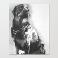rottweiler Canvas Prints featuring Rottweiler by onlypencil