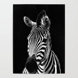 Zebra Black Poster
