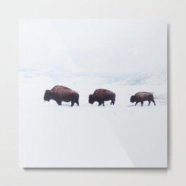 Buffalo Walking Through Snow in Winter Metal Print