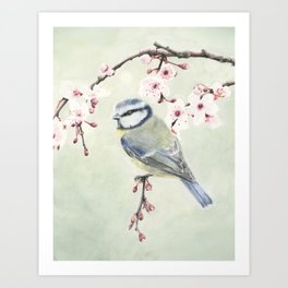 Blue Tit on Blossom on Green Art Print