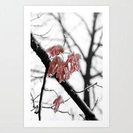 Scarlet Red Leaves in Winter Art Print