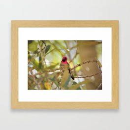 Hummingbird Beauty Framed Art Print