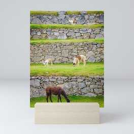 Llamas in Peru Mini Art Print