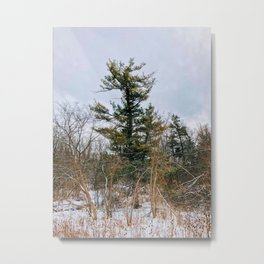 The Tallest Tree in The woods Metal Print