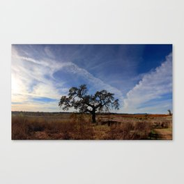 Lone Oak Tree, Laguna de Santa Rosa, Sonoma County Canvas Print