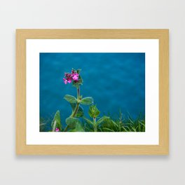 Red Campion on the Cliff Top Framed Art Print