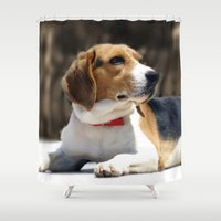 beagle Shower Curtains featuring Beagle by Artistically Home
