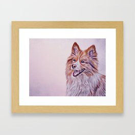 Border Collie dog Framed Art Print