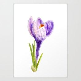 Delicate spring flower of crocus Art Print