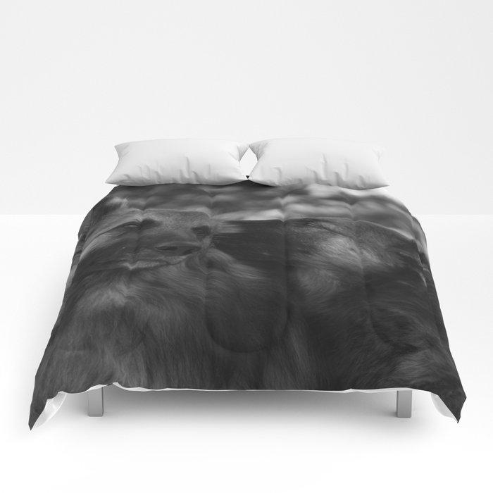 sweethearts Comforters