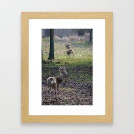 Roe Deer on Jeju Island Framed Art Print