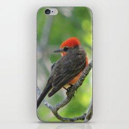 Vermilion Flycatcher iPhone Skin