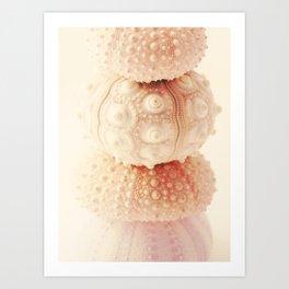 Dreamy Sea Urchins Art Print