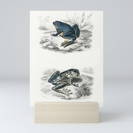 Shrinking frog (Pseudis Merianae) and Black-spotted casque-headed tree (Trachycephalus geographieus) Mini Art Print