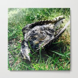 Lone Woodpecker Metal Print