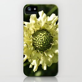 PALE CREAM BEAUTY SCABIOUS FLOWER iPhone Case