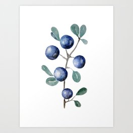 Blackthorn Blue Berries Art Print